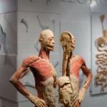 """Regno Unito: i corpi usati per la mostra di cadaveri """"potrebbero essere dissidenti cinesi"""