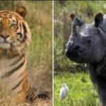 CINA: Torna dopo 25 anni il commercio di zampe di tigre e corni di rinoceronti. Il Wwf: Devastante