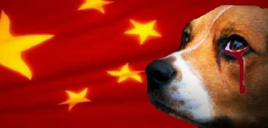 Cani E Gatti Scuoiati Vivi In Cina Le Inchieste Di Animal Equality