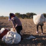Cina, lavoratori uiguri costretti a raccogliere a mano il cotone in condizione di schiavitù