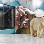 In Cina apre (tra le polemiche) un hotel popolato da orsi polari. [Video]